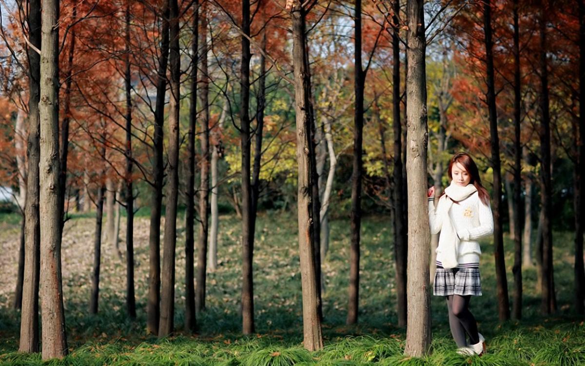 壁纸 风景 森林 树 桌面 桦林 桦树 1200_750